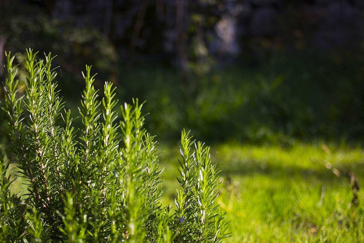 Veggie Garden at The Truffula Tree