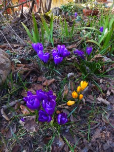 flowers_snowdrop1