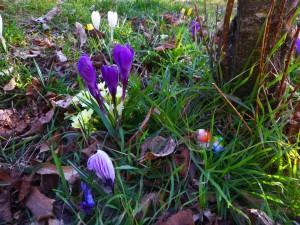 flowers_snowdrop3