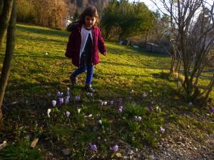 flowers_snowdrop5